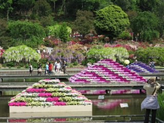 Pyramids of flowers on the pond