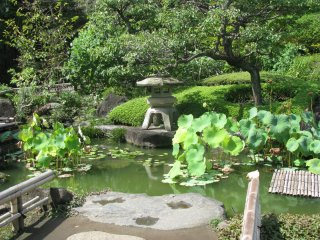 Traditional garden pond and a stone lantern