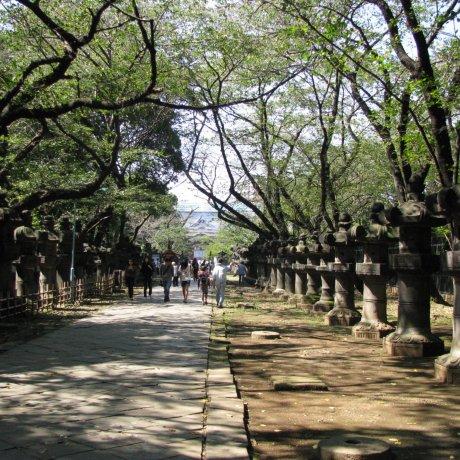 Tản bộ ở Tokyo: Công viên Ueno