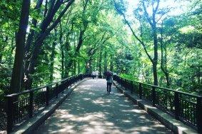린시 노 모리 공원