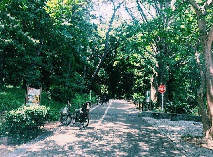 Nhìn vào công viên rừng Rinshi