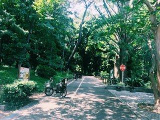 Looking into Rinshi No Mori Park