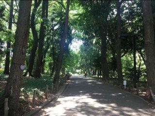 Đi bộ trên những con đường trong công viên