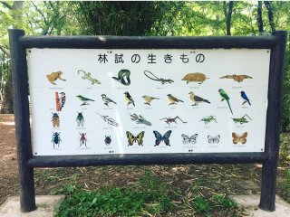 Signage indicating which wildlife live in the park