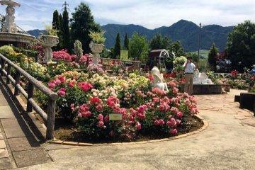 Сад роз и трав в долине Кофу