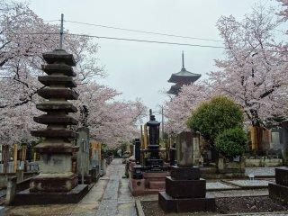 หลุมฝังศพโบราณกับเจดีย์ห้าชั้นที่เก่าแก่ที่สุดในโตเกียว