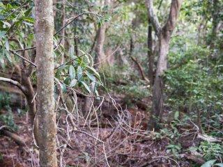 บางครั้งคุณก็สามารถพบกับเส้นทางเดินเข้าไปในป่า