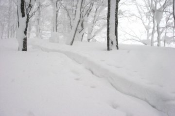 In winter trails are visible; walk here in summer and you might get lost in the woods