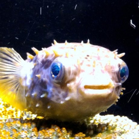 Churaumi Aquarium in Motobu Okinawa