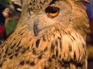 Owl who likes to turn his head