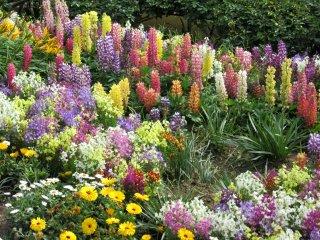 Разнообразные цветы в парке Асикага