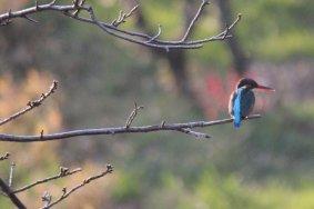 도고 공원의 새들