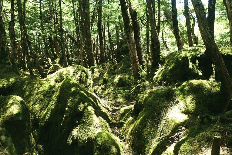 Koke no Mori – The Moss Forest