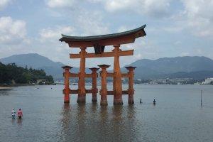 Apesar da maré não estar muito baixa, muitos visitantes aventuraram-se até ao torii para o tocar