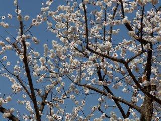 다양한 꽃 색깔의 좋은 혼합물이 있다. 여기 흰색...