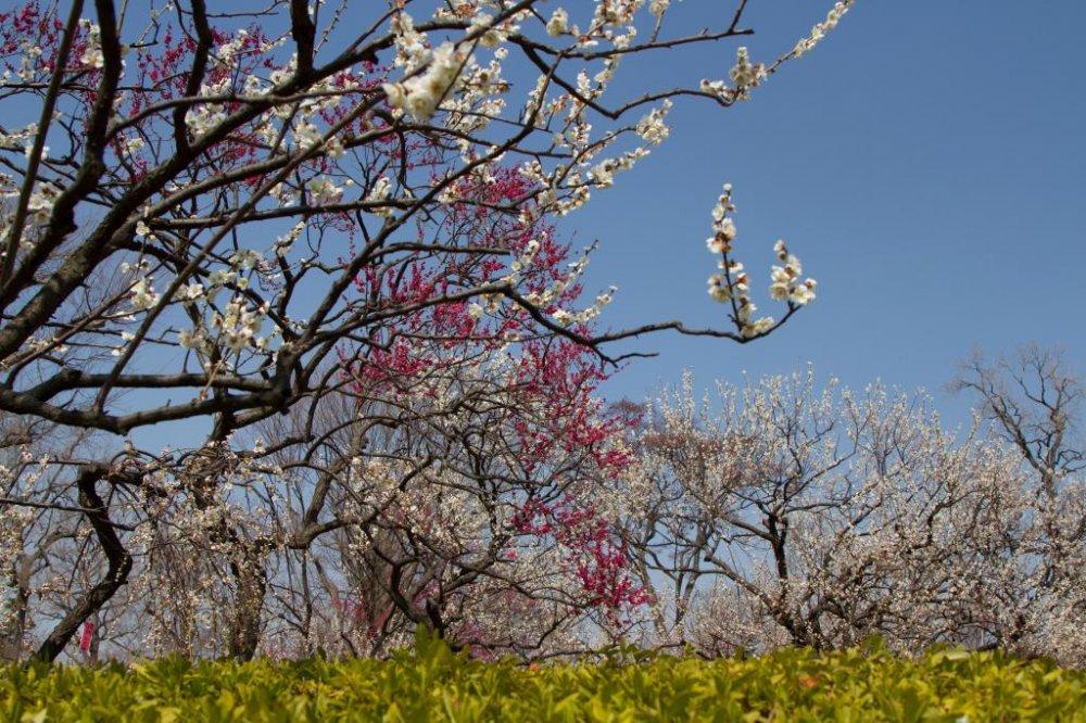 봄의 시작에 불과하지만, 색의 혼합은 이미 꽤 격렬하다