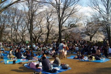 The blue sheets are synonymous with cherry blossom parties