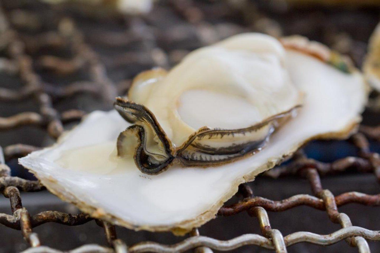 หอยนางลมสุดอร่อย