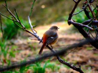 참새는 나뭇가지에 앉아 있는 흔히 볼 수 있는 광경이다