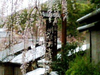 Weeping Cherry of Sannenzaka and Ninenzaka moments from Gion Kyoto