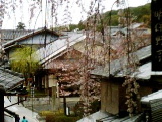 Weeping Cherry of Sannenzaka and Ninenzaka moments from Gion and Higashiyama in Kyoto