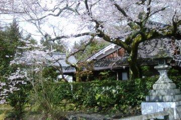 ดอกซากุระที่ Sannenzaka และ Ninenzaka