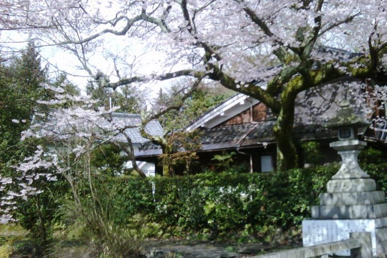 Sakura di Sannenzaka & Ninenzaka