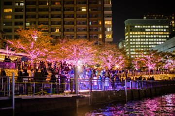 River Cruises and Winter Illuminations in Shinagawa