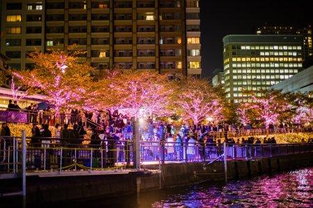 Sungai dan Iluminasi Shinagawa
