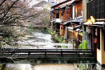 Shirakawa Canal Gion home of illuminated cherry blossoms from the last week of March to the first week April subject to the cherry blossoms blooming on time