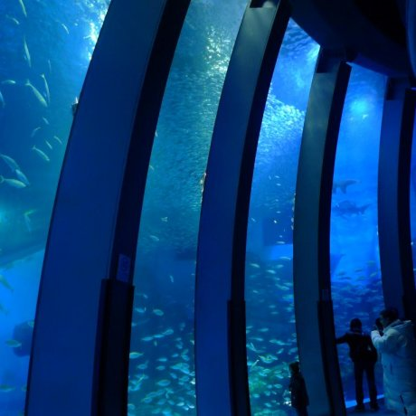 Hakkeijima Sea Paradise Aquarium