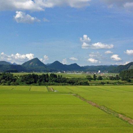 Kaneyama Seasons