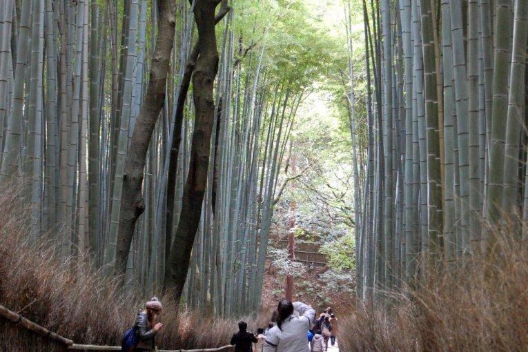 Rừng tre Sagano ở Kyoto