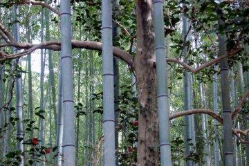 Bamboo bars
