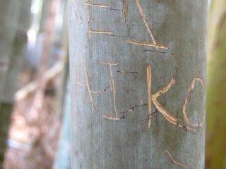 Tình yêu trên cây tre
