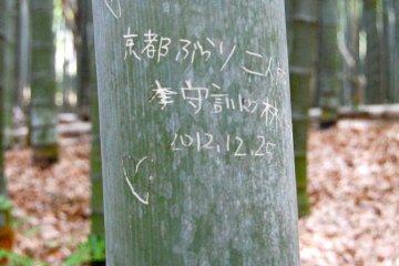 Bamboo love #2