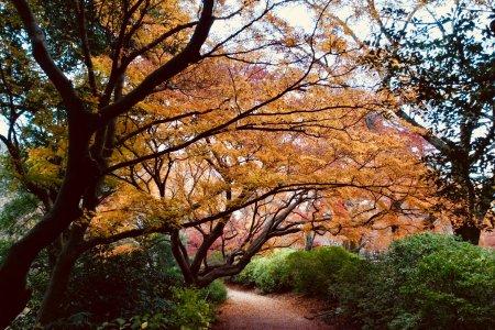 Taman Shimizu
