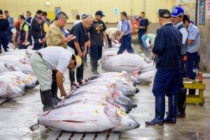 ศึกแห่งตลาดปลาโอซาก้าหรือโตเกียว ที่ไหนของสดรสเลิศกว่ากัน?