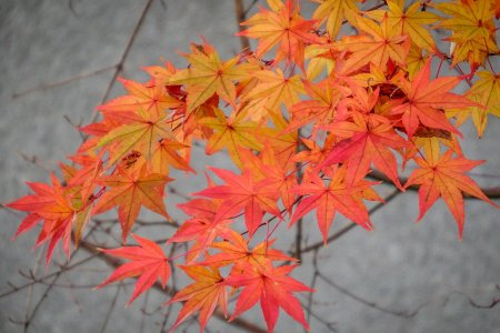 Autumn Colors at Ogawamachi Station