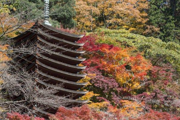 La pagode en automne