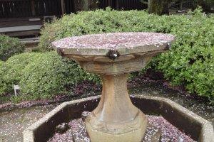 Cherry Blossom Fountain