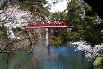 Цветение сакуры в Замке Оказаки
