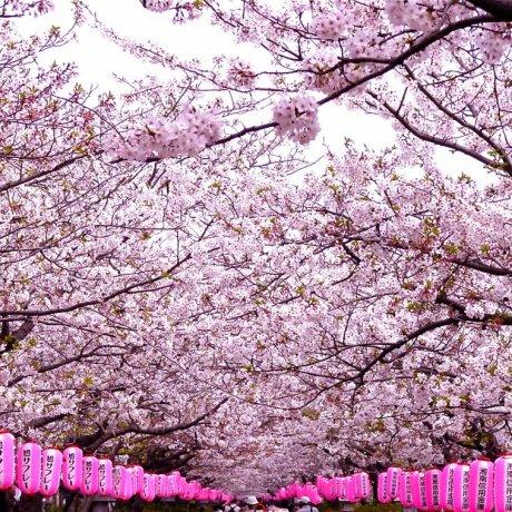 鎌倉の若宮大路