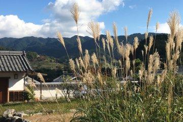 Asuka village