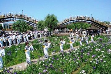 งานเทศกาลดอกไอริสแห่งอิทะโกะ
