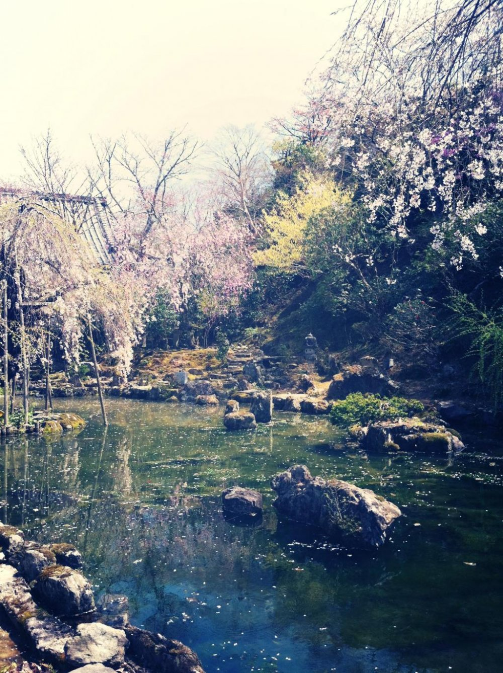 O Mount Yoshino! / I would not leave you, I feel / yet, until your flowers fall / would she wait for me?