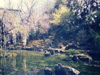 오 요시노 산! / 너를 떠날 생각이 들지 않는구나 / 너의 꽃잎이 모두 떨어질 때까지 / 그녀가 나를 기다려줄 수 있을까?
