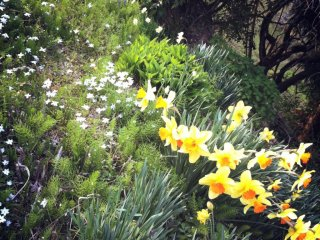 The emergence of flowers herald spring