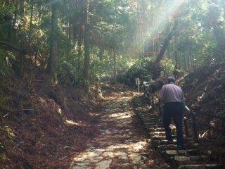 정상으로 향하는 등산길