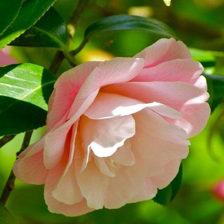 北鎌倉 東慶寺の春